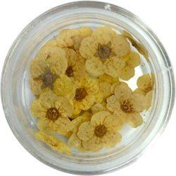 Szárított virág - citromsárga